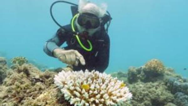 Great Barrier Reef ฟอกขาว