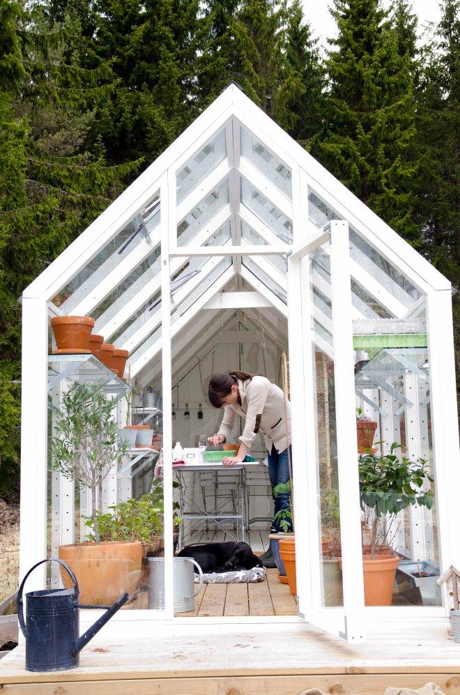 Sommeren 2012 fikk vi veksthus på torpet, det hadde vi ønsket oss lenge. Bildet er fra 2013. Ikke lenge før det skal fylles med frø fra både planter og grønnsaker.