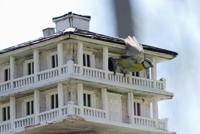 """Herr Grå som hadde observert det hele, fløy ut av villaen sin. Han kvitret på Herr Gul: """"Herr Gul - kom igjen - bli med på den nye saloonen da! Frøken Rød og herr Rød er det ikke noe poeng å leke med. Like barn leker best, vet du. Inne på saloonen er det mange av vårt slag - la oss møte flere hot birds som oss!"""