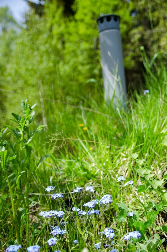 jordkjeller_blomst