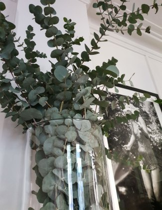 grønne-planter2