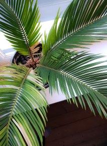 Et skikkelig fin palme som gir art deco-vibb.