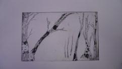 Trees, sugarlift etching