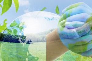 Proyecto: Primera cosecha del huerto ecológico