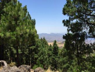 Bosque Tenerife