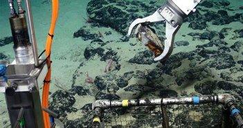 Канары опять в фокусе интересов международных корпораций по добыче природных ископаемых