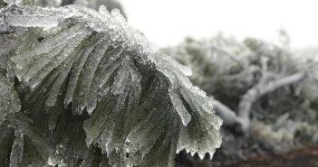 Первые заморозки нынешнего года на вулкане Тейде