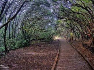 Островной Совет Тенерифе инвестирует два миллиона евро в улучшение и сохранение парка Anaga