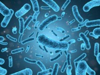 Листериоз: изучаются несколько возможных случаев на Канарах