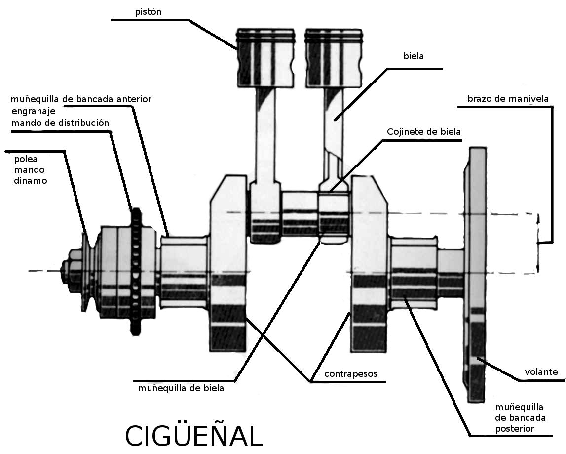 ciguenal3