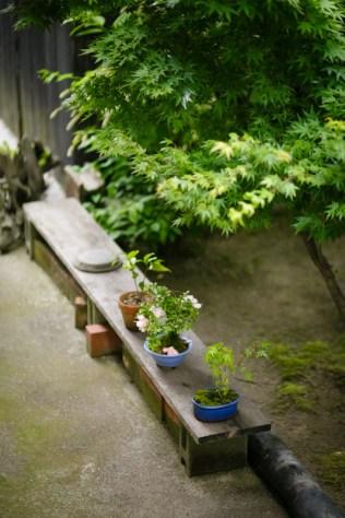 裏庭に、他の盆栽たちも見つけました。