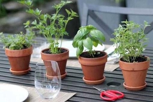 نباتات تحمي الدماغ