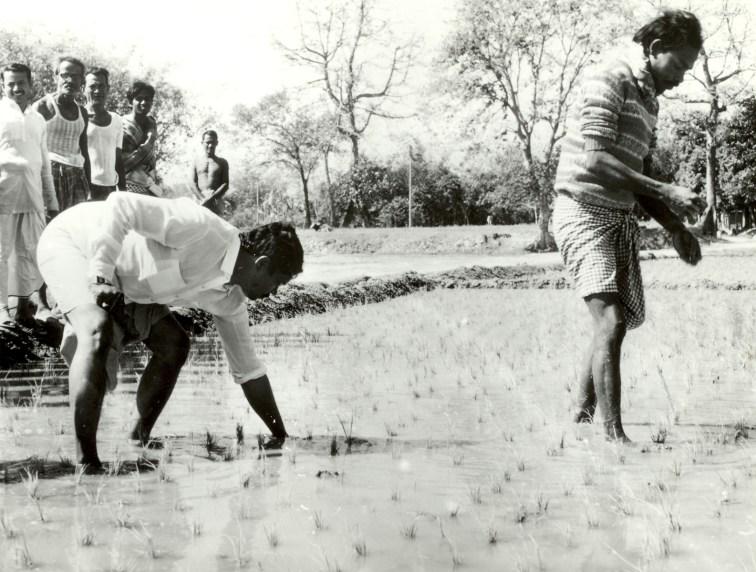 1989 - Urea deep placement (UDP) technology gains advocates in Bangladesh