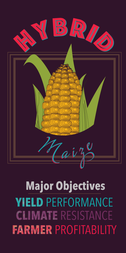 hybrid_maize_graphic