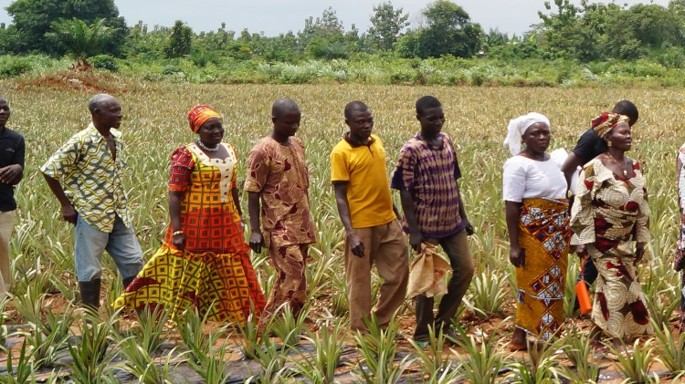 women-and-youth-in-pineapple-ppp-benin-promofruits-4-jpg