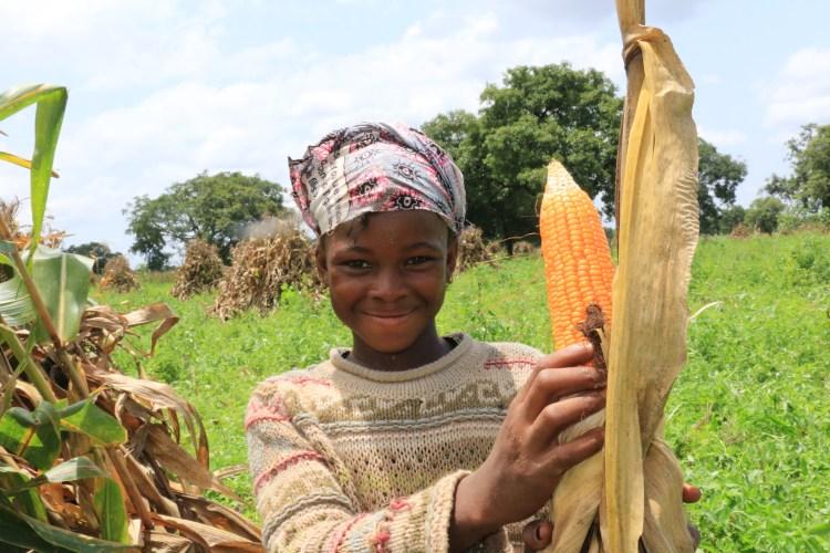 Mali maize SONAF_IMG_9360.JPG