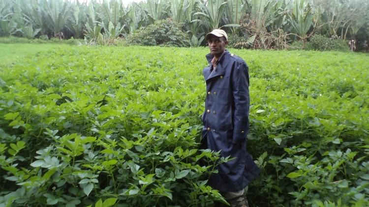 Ethiopia potato Liben DSC03858