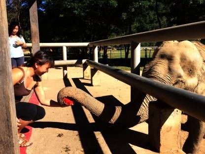 Me feeding an elephant a watermelon