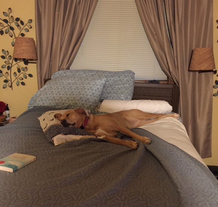 Dog sleeping on bed with head on pillow