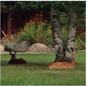 Deer on my walk