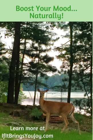 Deer standing in beautiful forest with lake in background