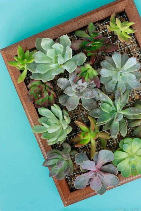 How to make a wall planter for succulent plants
