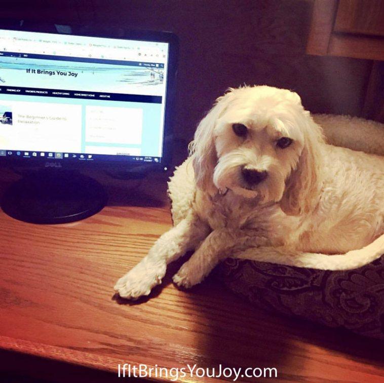 Dog blog assistant