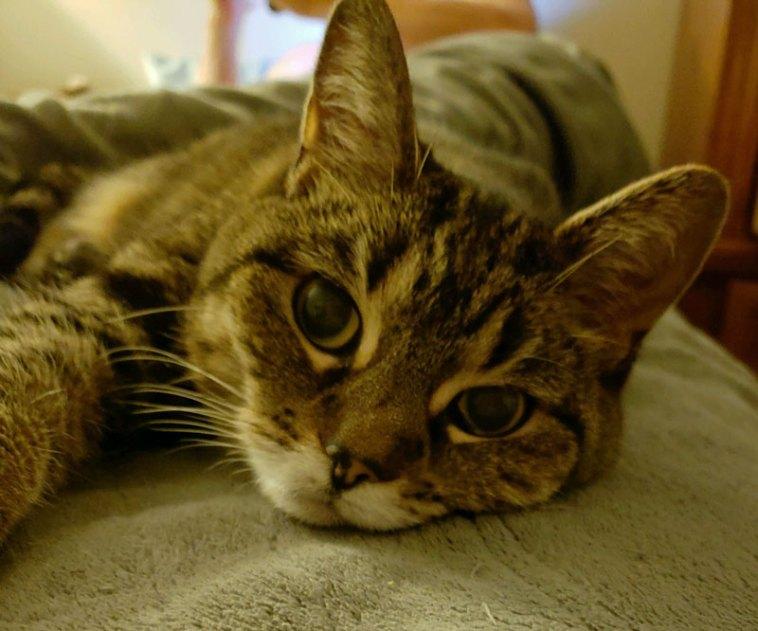 Beautiful cat snuggling