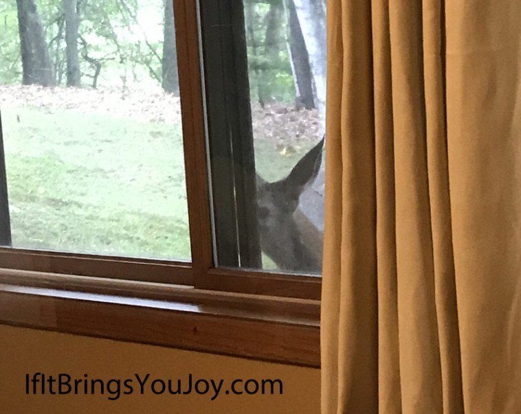 Curious deer looking in window. Nature is amazing!