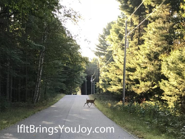 Deer running across the road in the woods. #nature