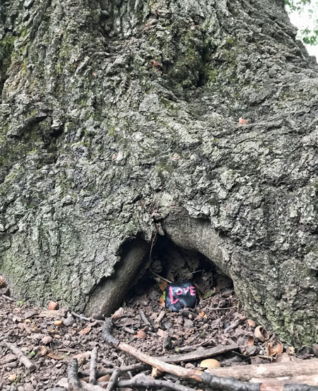 Kindness rock hidden in an old tree.