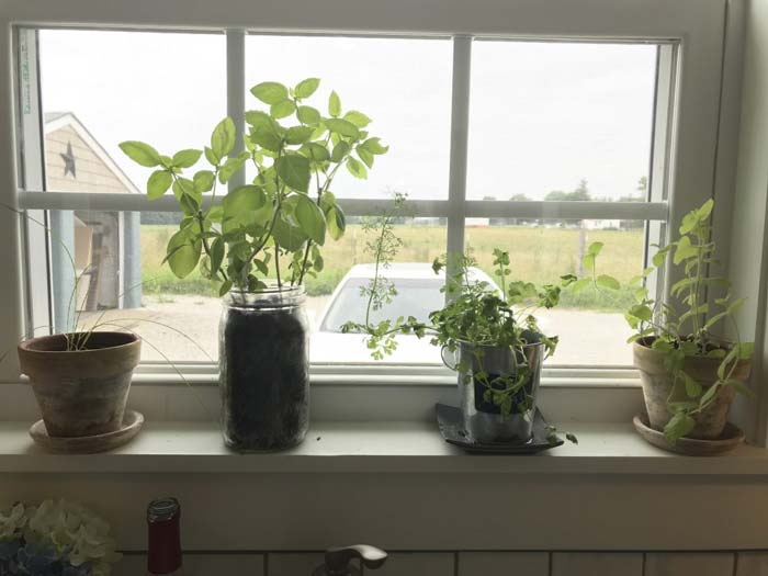 Plants in containers by window