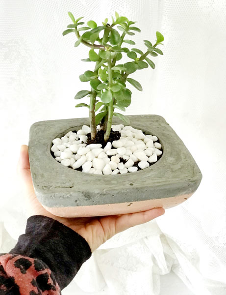 Hand made concrete planter