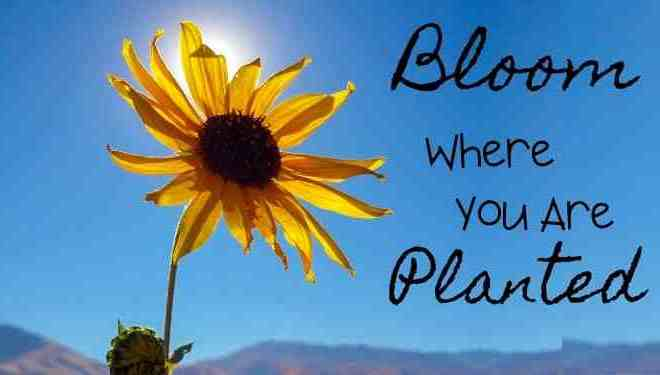 How to Bloom Where You Are Planted