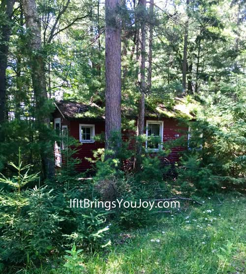 Old little cabin in the woods