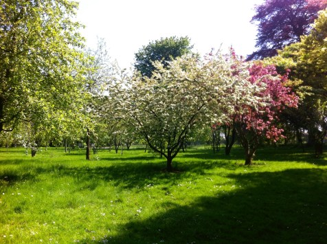 Botanical Gardens 10_edited