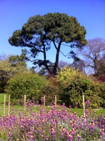 Botanical Gardens 5_edited