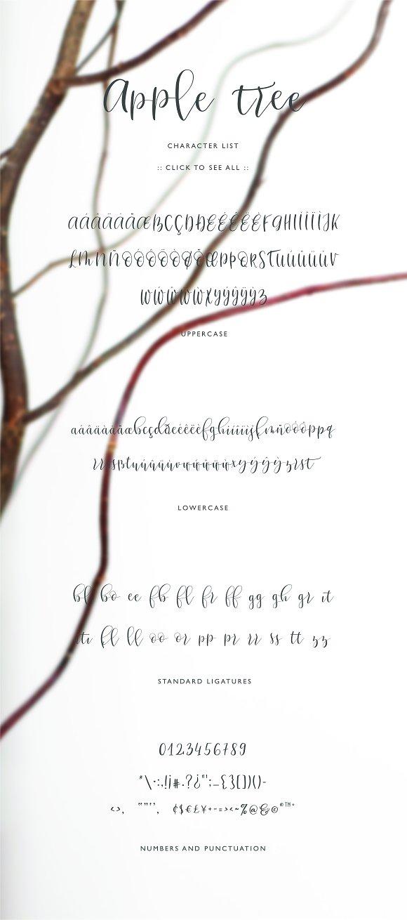 Apple Tree Calligraphy Typeface