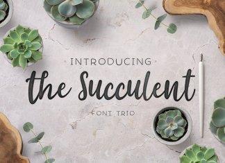 The succulent - font trio