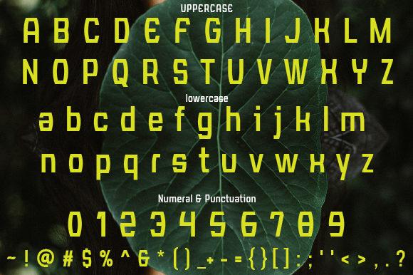 Calista Script Font