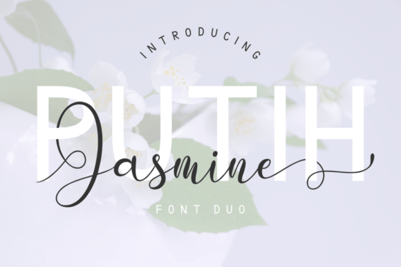 Putih Jasmine Duo
