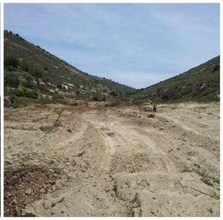 Zelt der Nationen : Bulldozer zerstören Obstbäume