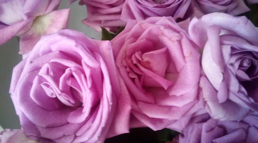 july 2019 bed of roses