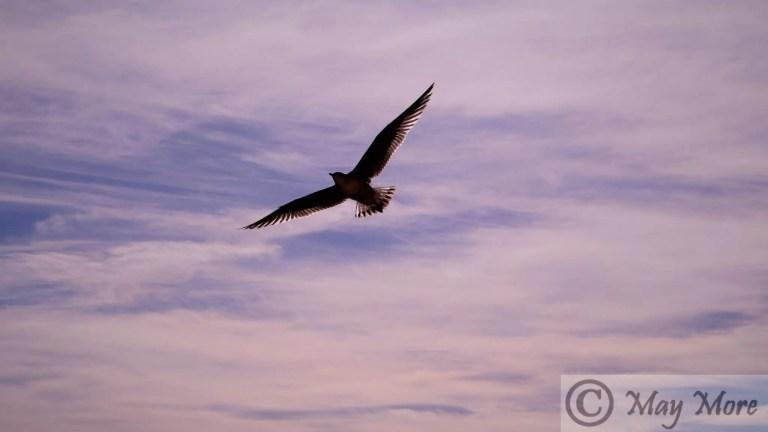 One Book ~ Birdy Soars