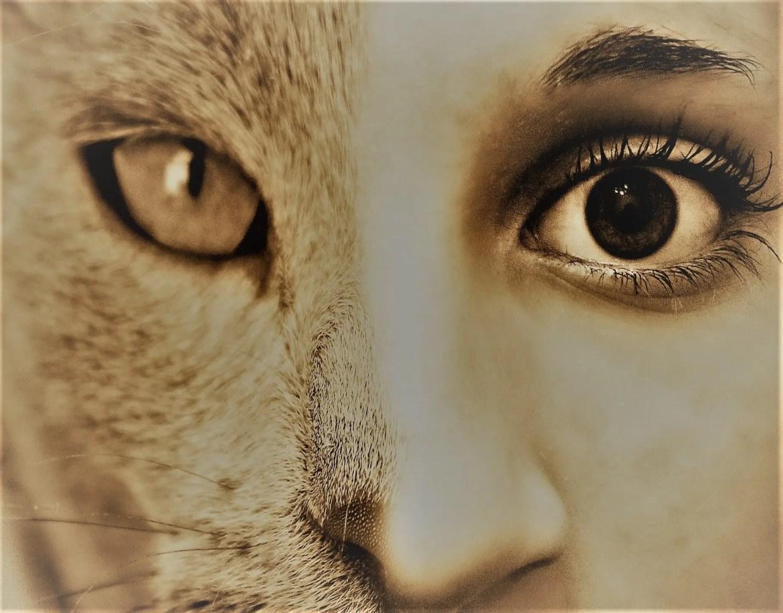 Cougar ~ Suggestive Flash Fiction