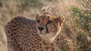 Wildlife-Volunteering-Namibia-44