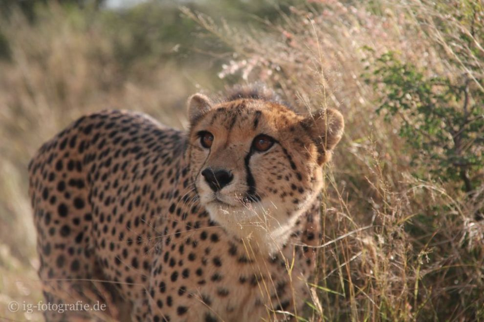 Wildlife-Volunteering-Namibia-44