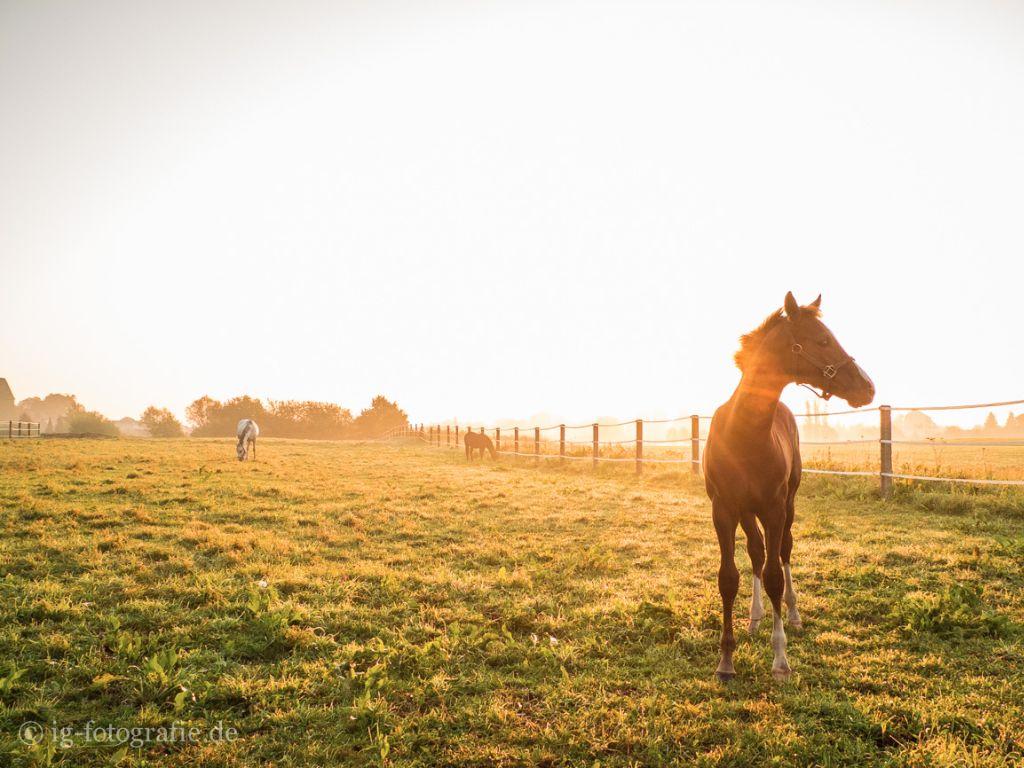 Sonnenaufgang-fotografieren-Tipps-Gegenlicht