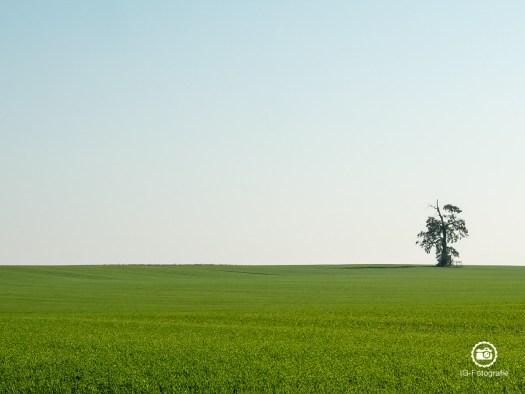 Fotokurs-Bildkomposition-Linien-3