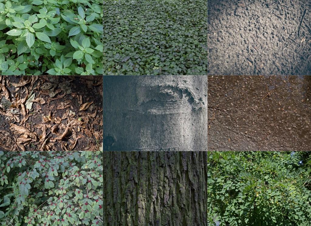 Ein Tag ohne Kreativität? Geht nicht! Und wenn es nur eine Collage aus einem Tag im Wald ist. Das reicht schon!